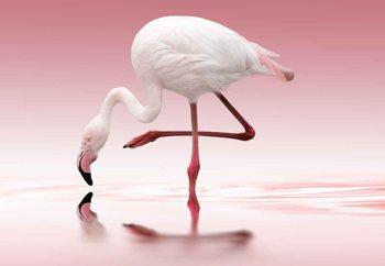Carta da parati Flamingo