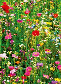 Carta da parati FLOWER FIELD