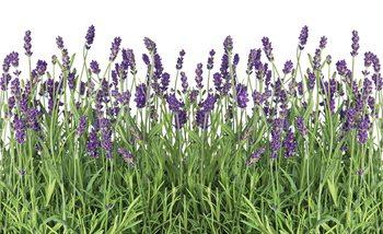 Carta da parati Flowers Lavender