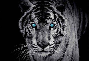 Carta da parati Tigre Animale