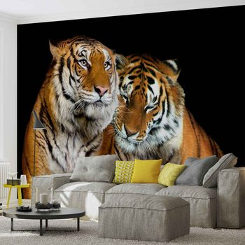 Carta da parati  Tigri