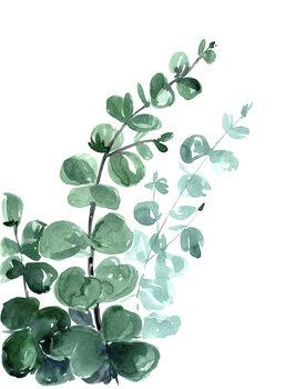 Carta da parati Watercolor eucalyptus bouquet