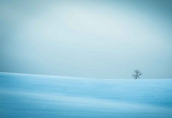 Carta da parati  Winter In Solitude