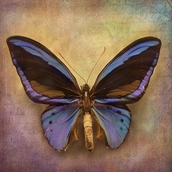 Cuadro en vidrio Butterfly - Blue