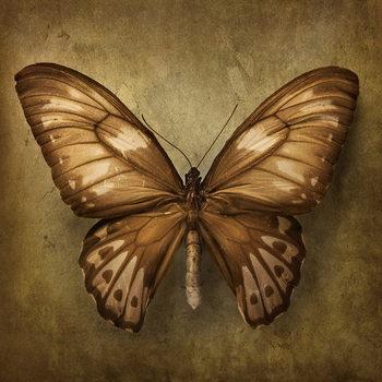 Cuadro en vidrio Butterfly - Brown
