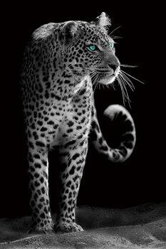 Cuadro en vidrio Gepard - Black and White
