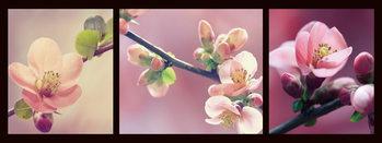 Cuadro en vidrio Pink World - Pink Orchid