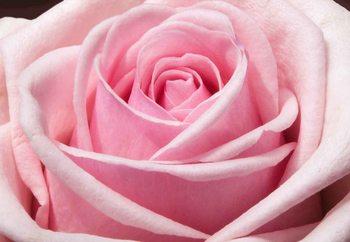 Cuadro en vidrio  The Sensual Rose