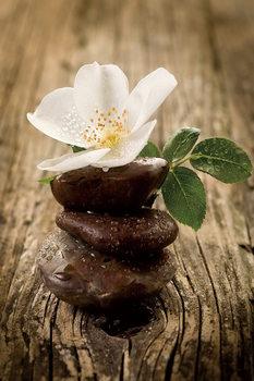 Cuadro en vidrio Zen - Blossom
