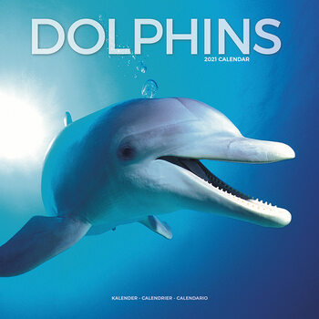 Ημερολόγιο 2021 Dolphins