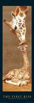 The first kiss - giraffes Dørplakater