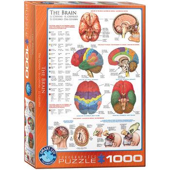Puzzle The Brain