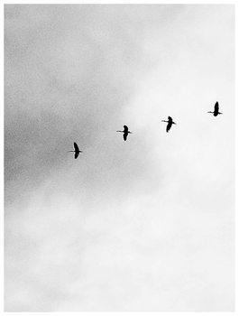 Illustration Border four birds
