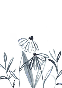 Illustration Echinacea meadow