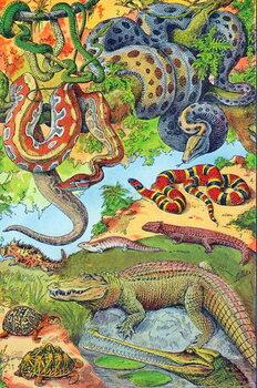 Konsttryck Illustration of  Reptiles  c.1923