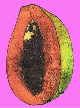 Konsttryck Papaya,2008