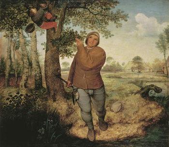 Konsttryck Peasant and Birdnester, 1568