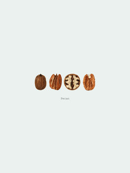 Illustration pecan