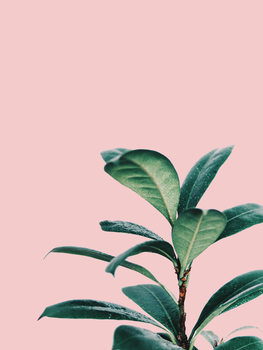 Illustration pink palm