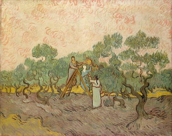 Konsttryck The Olive Pickers, Saint-Remy, 1889