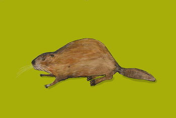 Konsttryck Beaver
