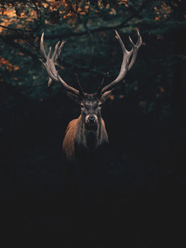Exklusiva konstfoton Deer1