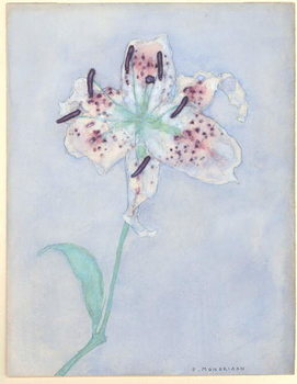 Konsttryck  Lily, after 1921