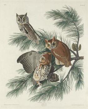 Konsttryck  Mottled Owl, 1830