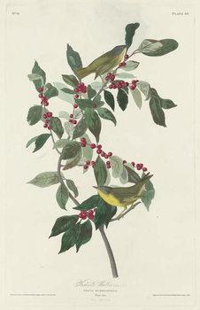 Konsttryck  Nashville Warbler, 1830
