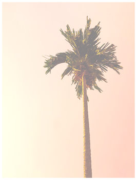 Illustration pink palm tree