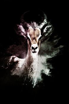 Exklusiva konstfoton The Antelope