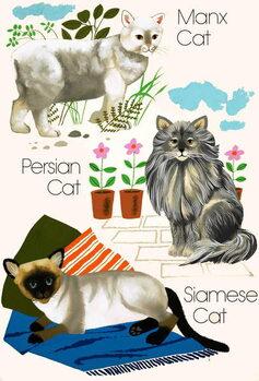 Domestic cats Festmény reprodukció