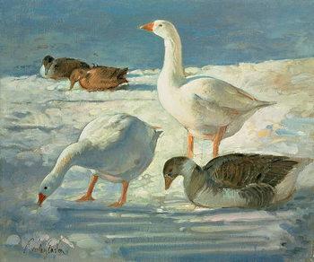 Geese and Mallards, 2000 Festmény reprodukció
