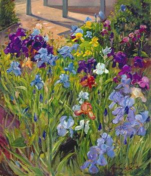 Irises and Summer House Shadows, 1996 Festmény reprodukció