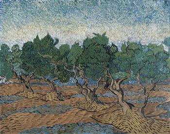 Olive Grove, 1889 Festmény reprodukció
