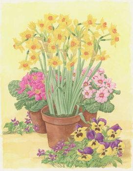 Pots of Spring Flowers, 2003 Festmény reprodukció