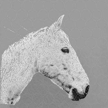 A horse name Sucré, 2015 Festmény reprodukció