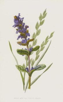 Bugle and Tall Fescue Grass Festmény reprodukció