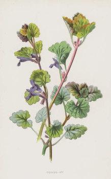 Ground-Ivy Festmény reprodukció