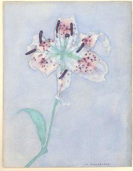 Lily, after 1921 Festmény reprodukció