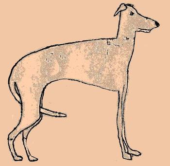 Skinny dog Festmény reprodukció
