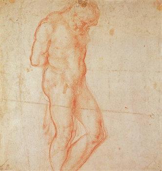 Study of a Nude Festmény reprodukció