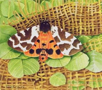 Tiger Moth, 1999 Festmény reprodukció