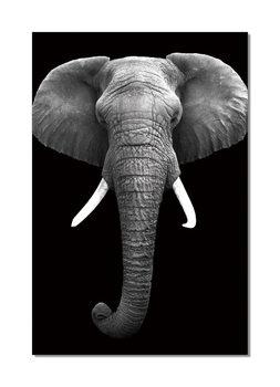 African Elephant (B&W) Modern kép
