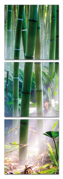 Bamboo Forest - Sunbeams modern festmény