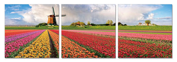 Holland - Fields with Tulips Modern kép