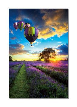 Lavender Field - Hot Air Balloons modern festmény