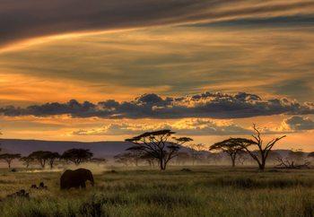 Africa Fotobehang