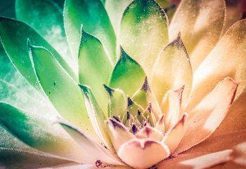 Aloe Plant Green And Orange Fotobehang