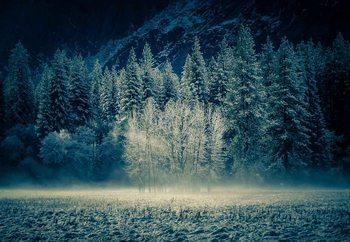 Aspen Grouping - Yosemite Valley Fotobehang